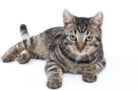 Allergiker Katze