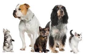 Tierhaarallergie Symptome