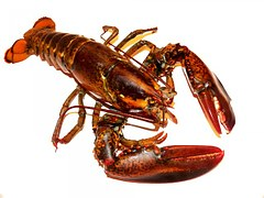 Hummer-Lobster-Krustentierallergie