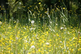 Frühling Pollenallergie
