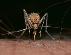 mückenschutz für allergiker