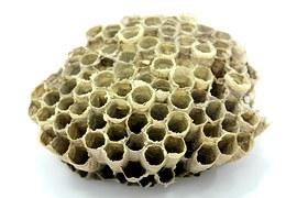 propolis allergie