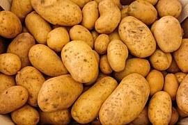 kartoffelallergie