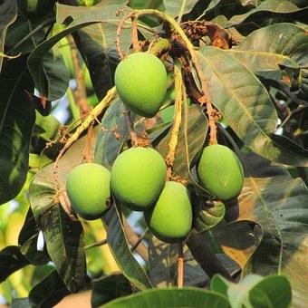 mango-allergie