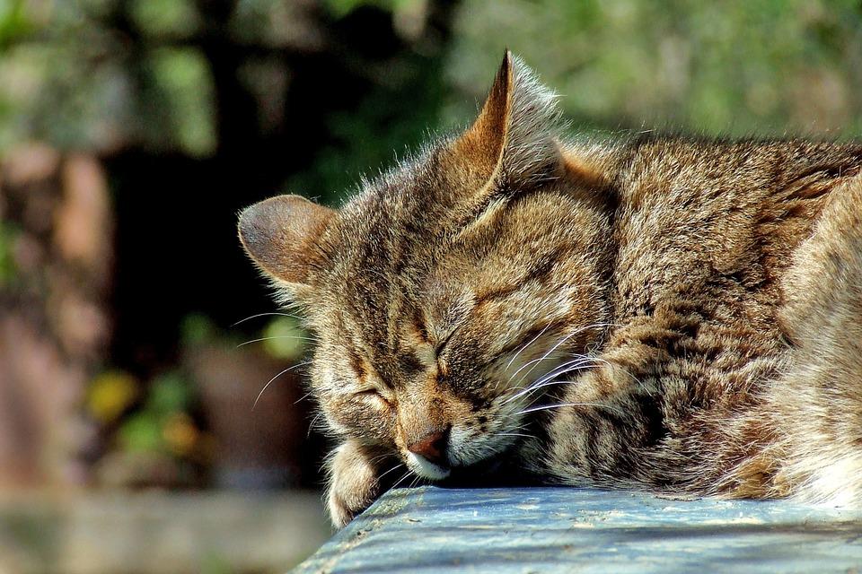 Katze mit Allergie