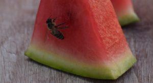 Bienenstichallergie beim Essen aufpassen