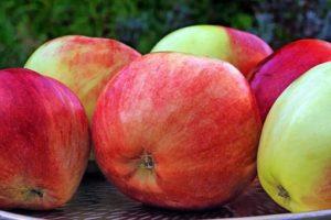 Gravensteiner ist verträglich bei Apfelallergie