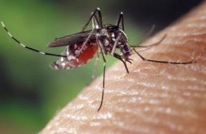 Insektenstich, Mückenstich