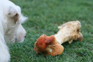 Hypoallergens Hundefutter Pferd Knochen