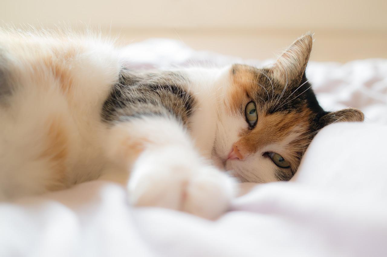 Katzenallergie. Symptome, Ursachen und Tipps für Allergiker