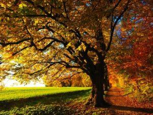 Allergie in Herbst oder Winter